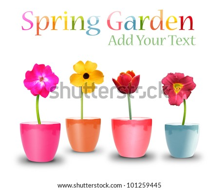 An assortment of different colorful flowers in pots on a white isolated background. Add your text message and use it for a garden or spring concept. - stock photo