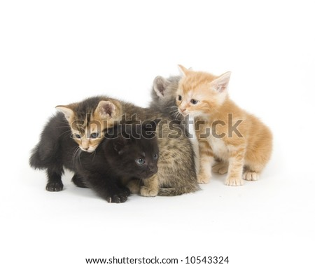 An assortment of kittens interact with each other on a white background - stock photo