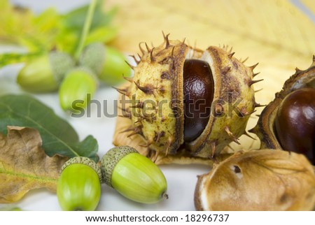 An autumn arrangement of conkers and acorns - stock photo