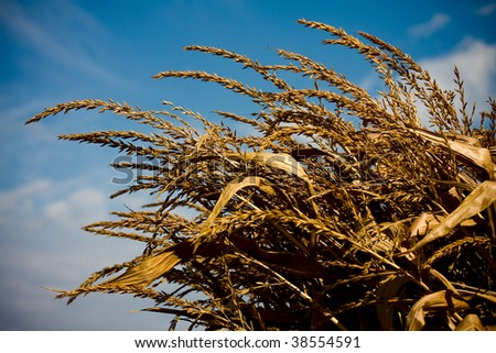 an autumn day in a corn field - stock photo