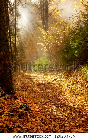 an autumn forest with falling leafs and amazing lightning - stock photo
