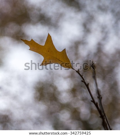An autumn leaf with interesting background bokeh. - stock photo