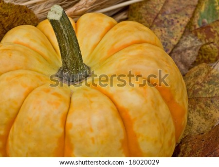 An Autumn Pumpkin ready for decoration or a pie filling! - stock photo