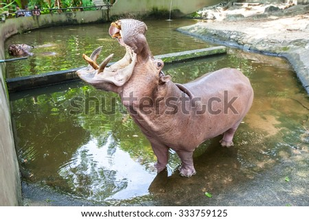 an close up from an eye of a hippo in the water - stock photo