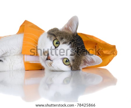An cute cat wearing an orange slicker. White background. - stock photo