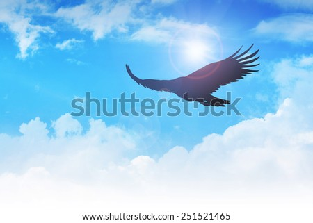An eagle flying in the air - stock photo