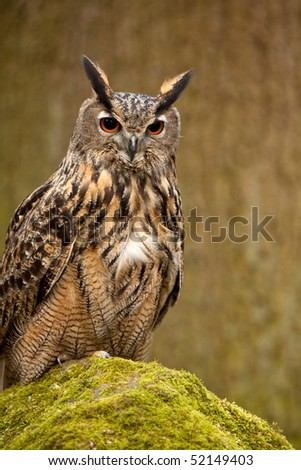 An Eagle Owl perched on a moss covered rock - stock photo