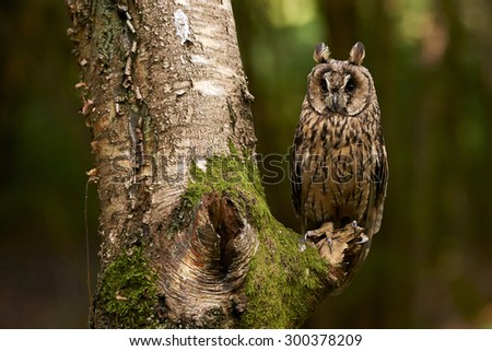 An Eagle Owl sitting in a tree
