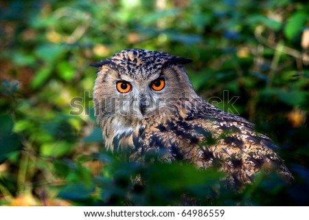 An eagle owl sitting in a wood - stock photo