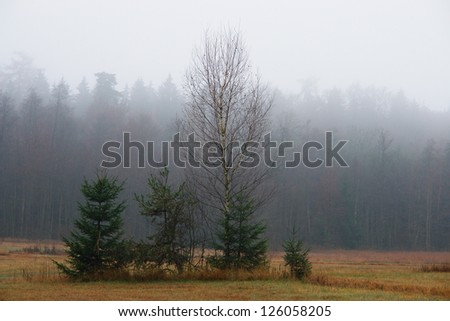 An early morning foggy view of this field with trees