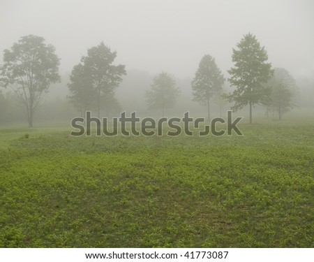 An early morning foggy view of this field with trees in Thompson Grove Park in Manalapan, New Jersey. - stock photo