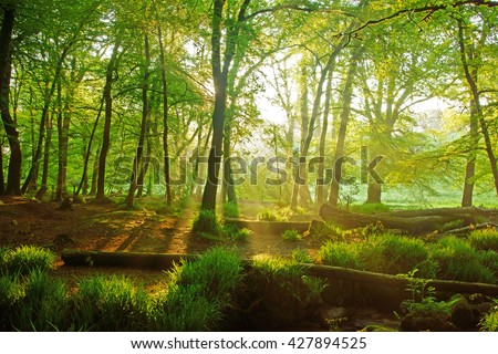 An early morning misty sunrise view of Draynes Wood in Spring at Golitha Falls National Nature Reserve, Cornwall, England, UK