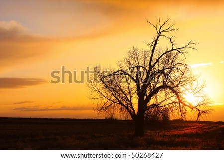 An early morning sunrise with a big cottonwood tree out in the country of Boulder County Colorado