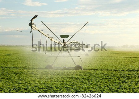 An early morning view of wheat field irrigated with a  center pivot  sprinkler system. - stock photo