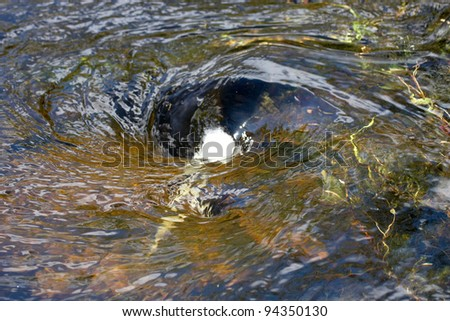 An eddy whirling around in a small stream - stock photo