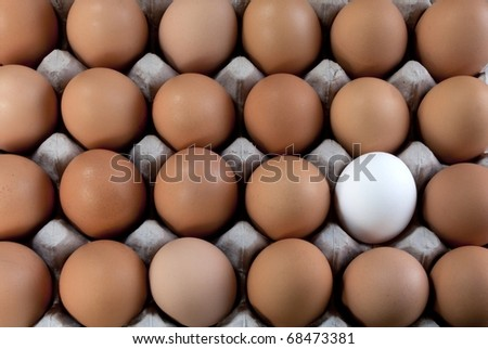 an egg white into brown eggs, representing visible minority - stock photo