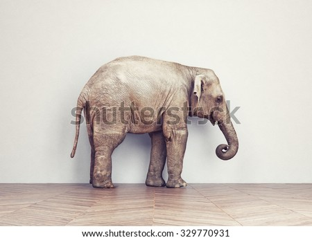 an elephant calm in the room near white wall. Creative concept - stock photo