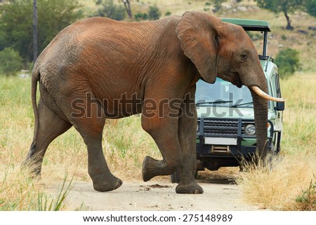 An elephant crossing the road to an off road vehicle during a safari in Africa - stock photo