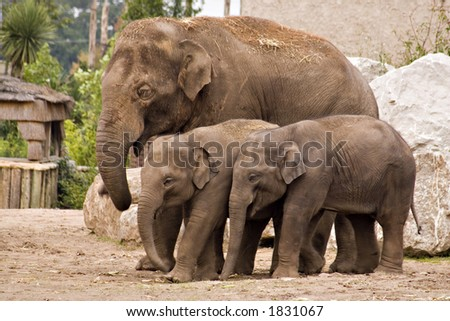 An elephant family in a group - stock photo