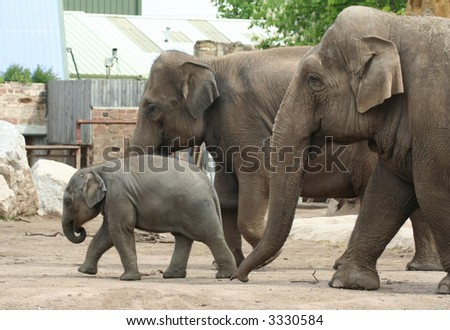 An elephant family looking after baby - stock photo