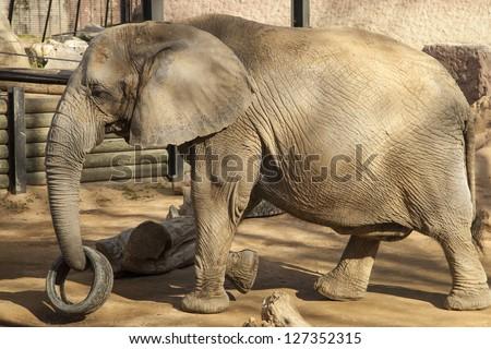 Sergi lopez roig 39 s animals set on shutterstock for Elephant barcellona