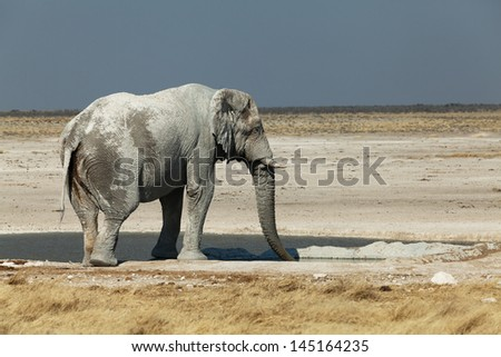 an elephant in the national park of Namibia