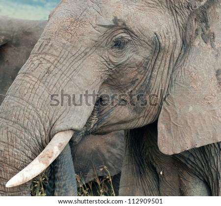 An elephant, Kenya - stock photo