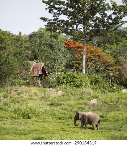 An elephant passing near secluded tropical cabin under huge orange and green trees. - stock photo