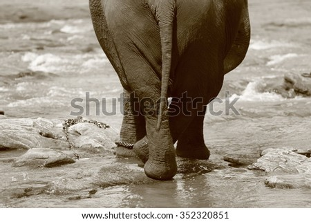 An Elephant strikes a Pose
