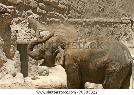 An elephant using its trunk to cover its back with dirt