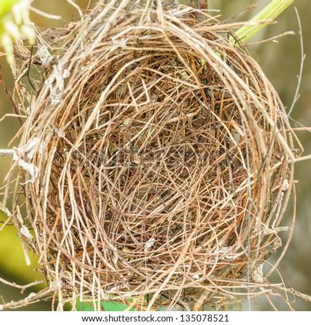 An empty bird nest - stock photo