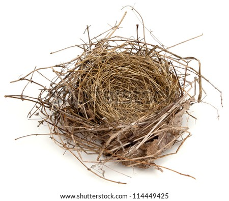An empty bird's nest - stock photo