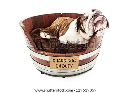 An English Bulldog taking a nap in a wooden dog bed with his head hanging off to the side and tongue hanging out with a sign saying Guard Dog on Duty - stock photo