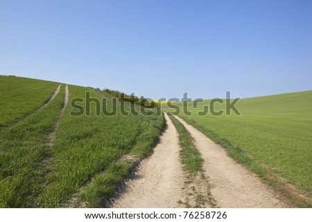 an english landscape with a farm track and arable fields under a blue sky in springtime