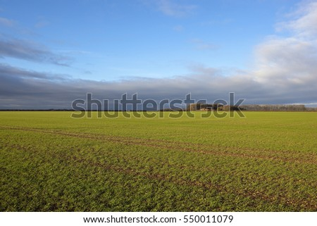 an english landscape with a green winter wheat field and a farm with trees and hedgerows in the yorkshire wolds under a cloudy blue sky