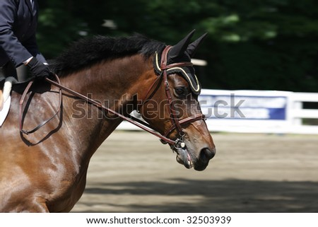 An equestrian horse running - stock photo