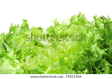 an escarole endive on a white background