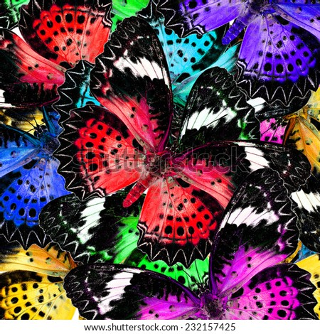 An Exotic Colorful Background Pattern made of Leopard Lacewing butterflies in fresh colors - stock photo