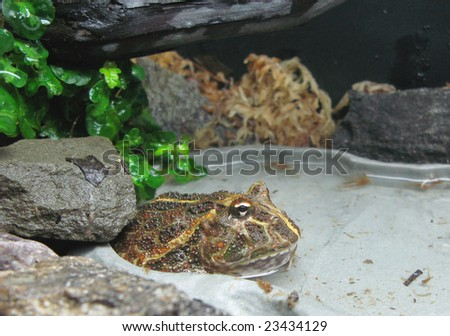 An exotic toad - stock photo