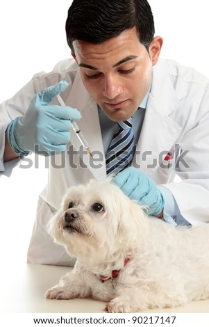 An expert veterinarian medicating a small dog using a syringe needle to the back, scruff of the neck. - stock photo
