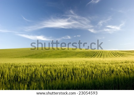 an extensive grain cultivation - stock photo