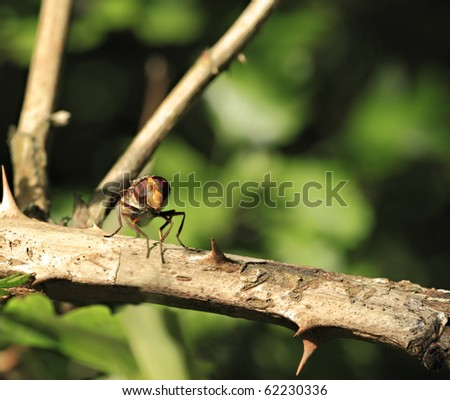 An extreme close up of a hoverfly on a tree branch - stock photo