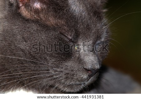 An Extreme Closeup of a Cat with a Noticeable Discharge in its Eye - stock photo