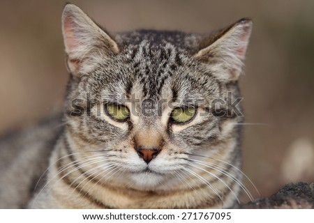 An Extreme Closeup on an Isolated Feral Cat Face - stock photo