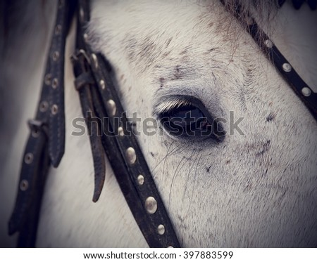 Horse muzzle stock photos royalty free images vectors for Thoroughbred tattoo lookup