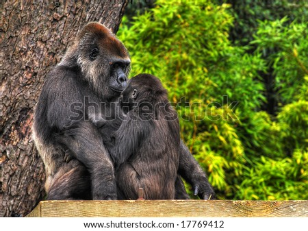 An HDR image of a mother and baby gorilla looking tenderly into eack others eyes - stock photo