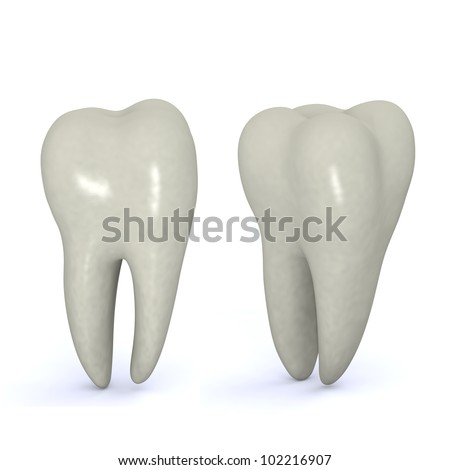 molar tooth picture