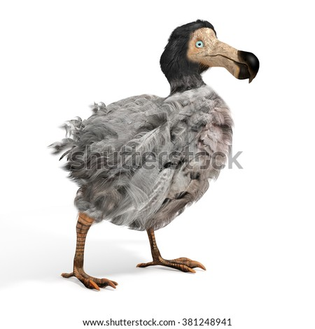 An illustration of the extinct Dodo Bird on a white background. The dodo (Raphus cucullatus) is an extinct flightless bird that was endemic to the island of Mauritius, east of Madagascar