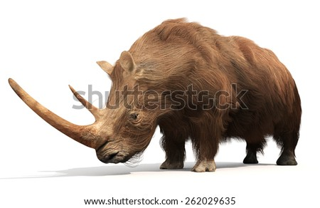 An illustration of the extinct Woolly Rhinoceros on a white background. The woolly rhinoceros was a member of the Pleistocene megafauna, common throughout Europe and northern Asia.  - stock photo