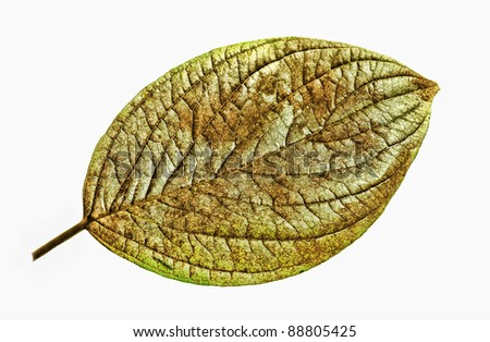 An illustrative image of a leaf on white background